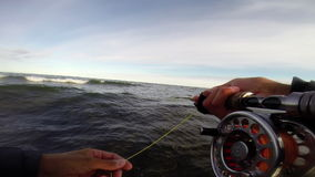 Fly fishing in the baltic sea after trout. Fly fishing in the ocean stock footage