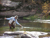 Fly Fishing 1. Fly fishing in Eleven Mile Canyon, Colorado Stock Photography