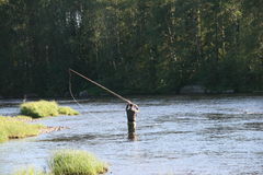 Fly fishing i Byskeälv, Norrland Sweden Stock Photography