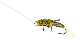 Fly fishing lure wasp Stock Photo