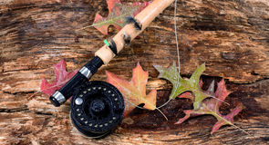 Fly fishing reel on wet old weathered tree and autumn leaves Stock Image