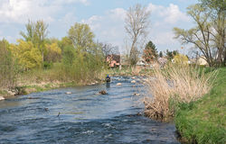 Fly fishing in the renatured Nidda River Royalty Free Stock Images