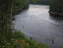 Fly fishing in river. Many fly fisherman in river Stock Image