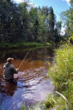 Fly fishing for trout Royalty Free Stock Image