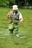 Fly-fishing for trout. A fly-fisherman brings in a rainbow trout which he has just hooked on a dry fly Stock Photography