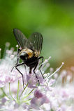 Fly and flover Royalty Free Stock Images