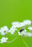 Fly on flower Royalty Free Stock Photo