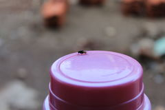 Fly food. Be careful with these animals while perched on food Royalty Free Stock Photography