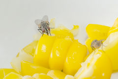 Fly on food Royalty Free Stock Image