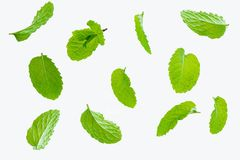 Fly fresh raw mint leaves isolated on white. Background Royalty Free Stock Image