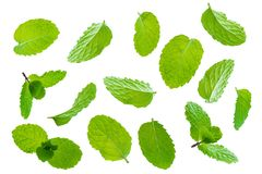 Fly fresh raw mint leaves isolated on white. Background Stock Photo