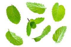 Fly fresh raw mint leaves isolated on white. Background Stock Images