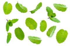 Fly fresh raw mint leaves isolated on white. Background Royalty Free Stock Photo