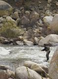 Fly fshing the Kern. Man fly fishing in the Kern River in the Southern Sierra Nevada Mountains Royalty Free Stock Photography