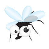 Fly - funny cartoon illustration. Funny cartoon illustration of cockeyed fly Stock Images