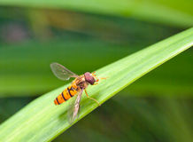 Fly on the grass Royalty Free Stock Images