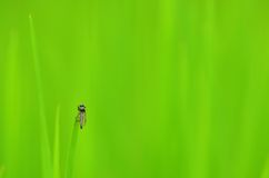 Fly on grass Royalty Free Stock Photo