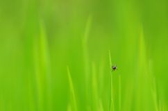 Fly on grass Royalty Free Stock Photography