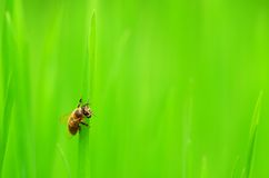 Fly on grass Stock Images