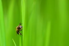 Fly on grass Royalty Free Stock Photos