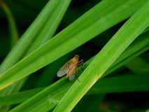 A fly in the grass Stock Images
