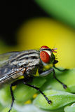 Fly on the green Royalty Free Stock Image