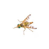 Fly with green eyes on a white background Stock Photography