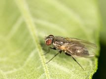 Fly on a green leaf. close. In the park in nature Royalty Free Stock Photos