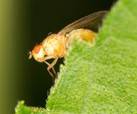 Fly on a green leaf. close. In the park in nature Royalty Free Stock Image