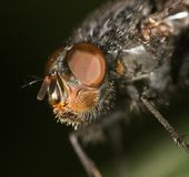Fly on a green leaf. close Royalty Free Stock Images