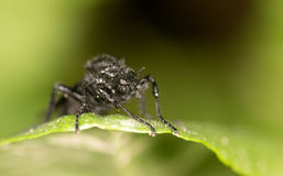 Fly on a green leaf. close. A photo Royalty Free Stock Images