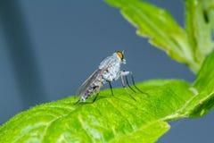 Fly on green leaf Stock Photos