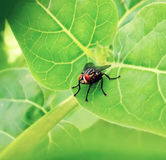 Fly on green leaf in the garden Royalty Free Stock Photography