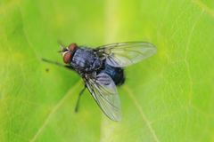 Fly on the green leaf Royalty Free Stock Images