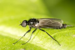 Fly on a green leaf. macro. In the park in nature Stock Photo
