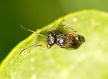 Fly on a green leaf in nature. close-up.  Royalty Free Stock Photography