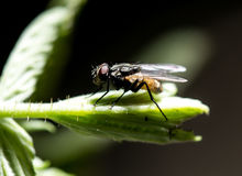 Fly on a green leaf in the open air.  Stock Photos