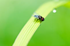 Fly in green nature Royalty Free Stock Photography