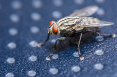 Fly in green nature Royalty Free Stock Photos