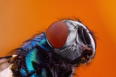 fly at high magnification taken with macro objective Royalty Free Stock Photos