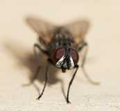 Fly home. macro Stock Images