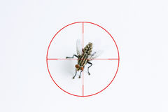 Fly or housefly and red target sign for elimination concept, Fly Stock Photos