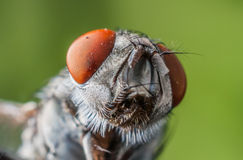 Fly. Housefly, very increased in size Royalty Free Stock Photos