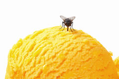 Fly on ice cream Royalty Free Stock Photos