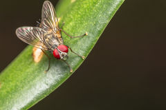Fly insect. Close up of fly insect in the nature Stock Image