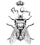 Fly insect with crown Royalty Free Stock Photography