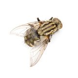 Fly isolated Stock Images