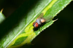 Fly on a leaf Stock Image