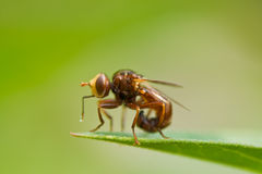 Fly on a leaf Stock Photos