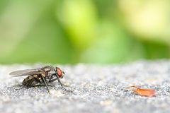 Fly and leaf Royalty Free Stock Image